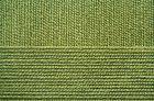 №252 зеленый горошек
